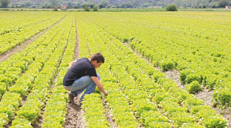 agricoltura biologica lazio regione zingaretti buschini frosinone ciociaria