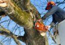 Alberi pericolosi: fino a 700 euro di multa per chi non li taglia