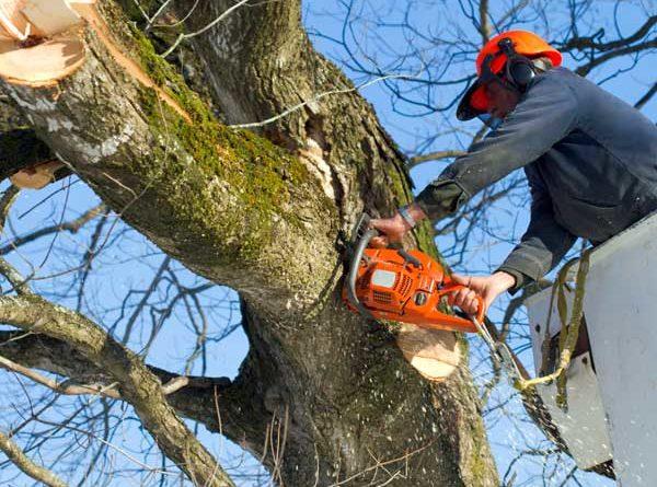 taglio alberi pericolosi veroli il corriere della provincia