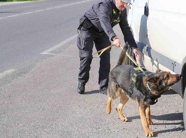 droga finanza cane il corriere della provincia