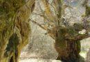 A Colle San Magno passeggiata tra storia e castagni secolari