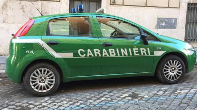 forestali carabinieri arresti