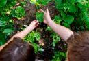 Frosinone, scuole: orti urbani e nuovi alberi
