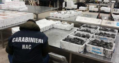 forestali azienda prodotti ittici il corriere della provincia