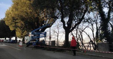 potatura alberi frosinone il corriere della provincia