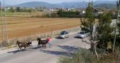 corsa cavalli pasqua sora il corriere della provincia