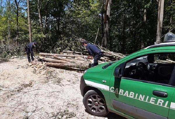 furto legna picinisco il corriere della provincia