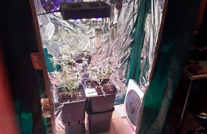 coltivazione droga casa