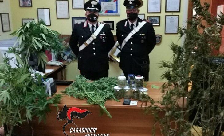 marijuana pofi