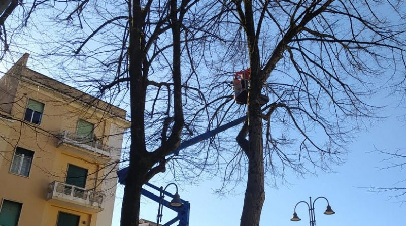 potatura alberi frosinone