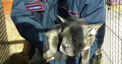 cuccioli-carabinieri truffa pontecorvo frosinone ciociaria