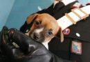 Aquino, cucciolo di cane trovato agonizzante a terra: denunciato 57enne