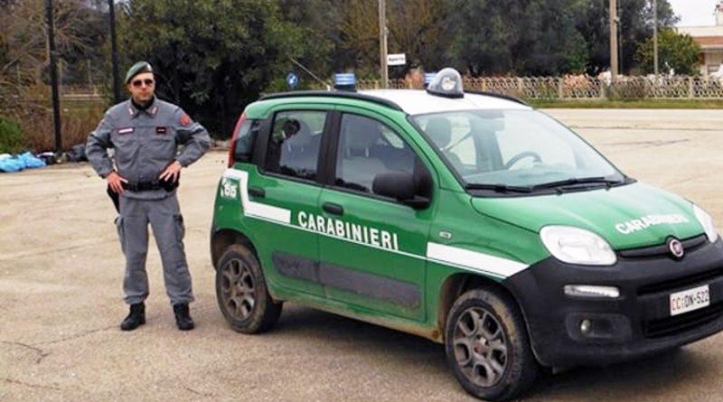 carabinieri forestali forestale