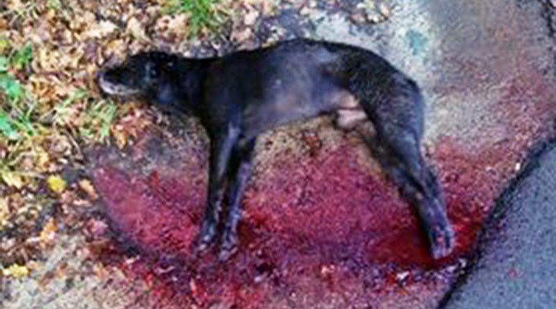 cane ammazzato ceccano